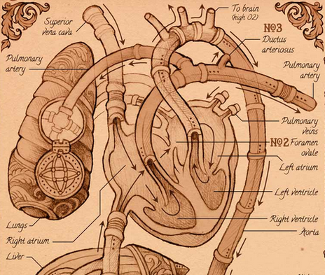 The Visual Story of the Human Heart - Scientific American Blog Network