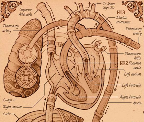 The Visual Story of the Human Heart