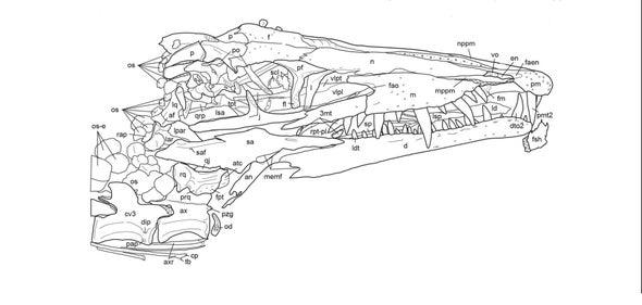 Paleo Profile: The Dream Coast Crocodile