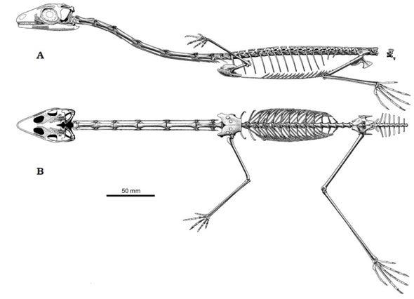 Paleo Profile: Ozimek's Flyer