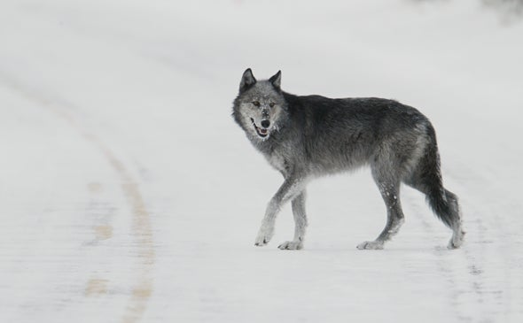 Ice Age Death Trap Yields an Unexpected Carnivore