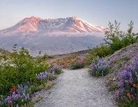 Murder! Magma! Miscreants! A Mount Saint Helens Update