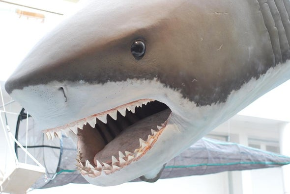 Fossil Whale Bones Record Prehistoric Shark Bites