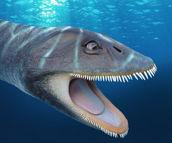 Paleo Profile: The Sieve-Toothed Plesiosaur