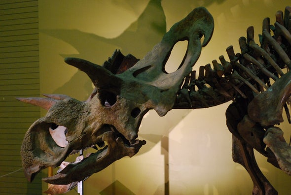 The Medusaceratops Mystery