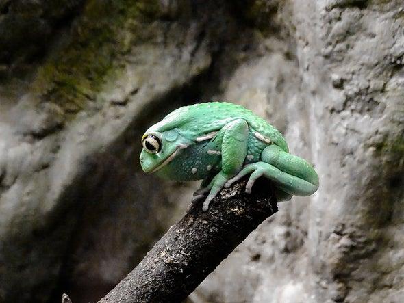 Are Zoos Failing Amphibians?