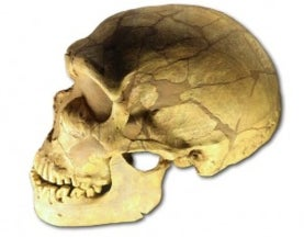Sex with Neandertals Introduced Helpful and Harmful DNA into Modern Human Genome