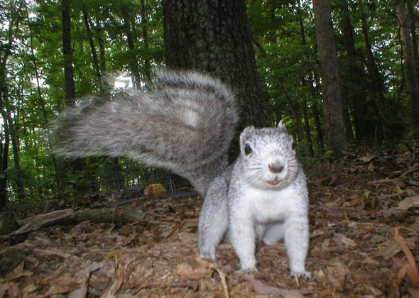 Squirrel! Conservationists Cheer as Giant Squirrel Recovers, Leaves Endangered Species List