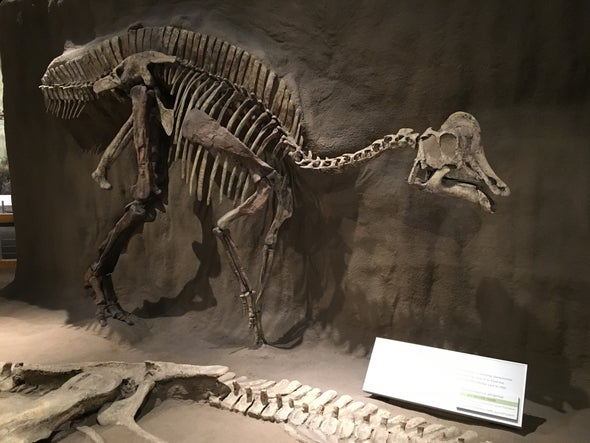 How Dinosaurs Chewed without Cheeks