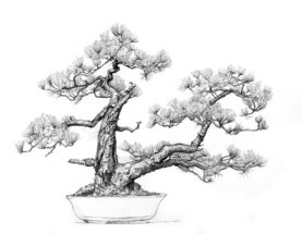 Portraits of Bonsai at the Brooklyn Botanic Gardens