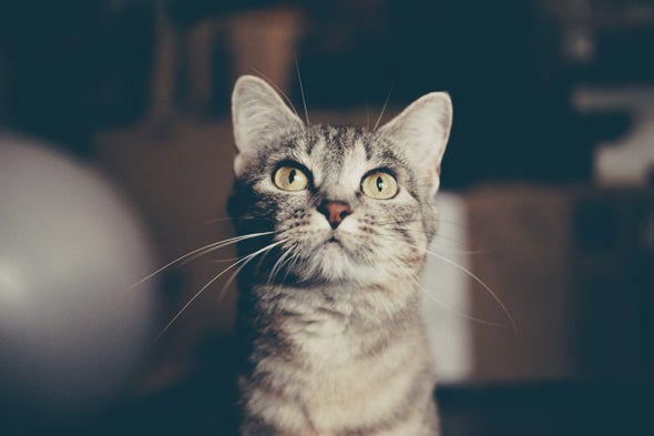 Do You Play with Your Cat? This Online Study Is for You!