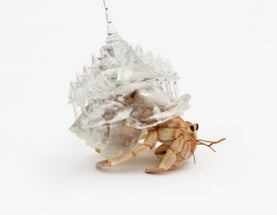 Crab Moves in Under Chrysler Building; Refuses to Budge