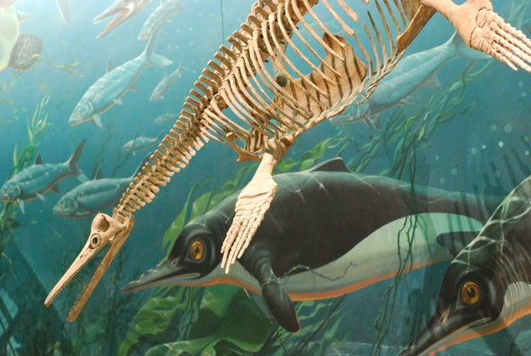 How Sea Dragons Carved Up the Prehistoric Oceans