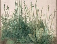 A Wondrous Look Inside a Tuft of Grass