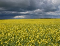 The Future of GMO Food