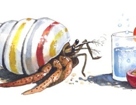 Terrestrial hermit crabs only smell their favourite snacks when water is around