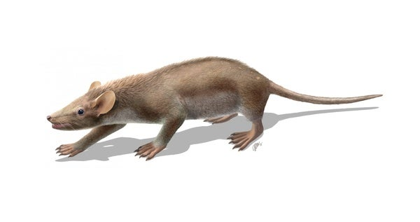 A Spiky Mammal from the Heyday of the Dinosaurs