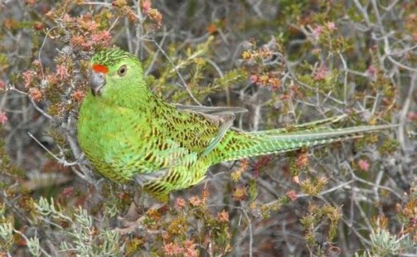 Fire Destroys 90 Percent of Rare Bird's Habitat in Australia