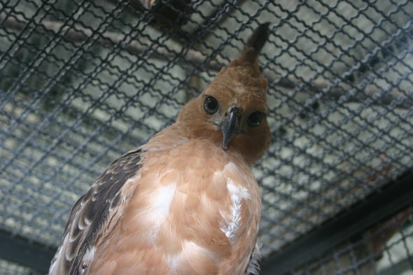 Illegal Pet Trade Threatens 13 Indonesian Birds with Extinction