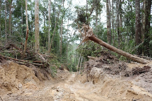 Signs of Hope for Nature in a Rapidly Degrading World