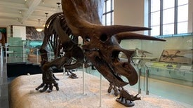 There Are More Dinosaurs to Discover from the Time of <i>T. rex</i>