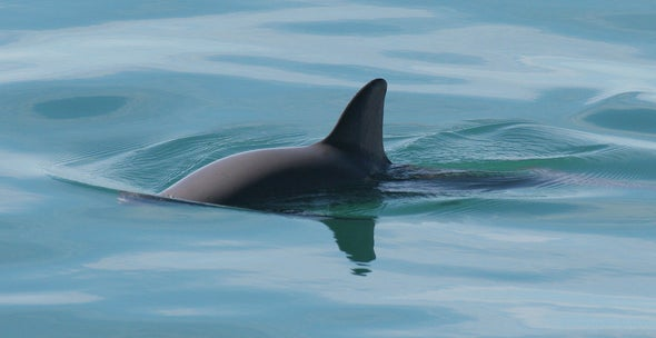 Saving the Vaquita: New Promises and New Threats