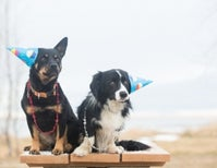 3 Ways Dogs Have Been `Consciously Uncoupling' Way Before Gwyneth