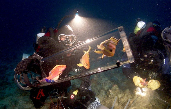 The Richest Reef: Deep Diving into the Twilight Zone