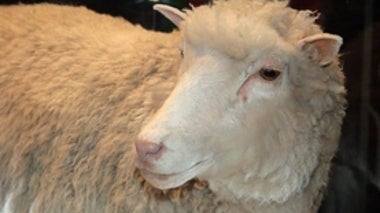 Have the Ethical Questions Surrounding Cloning Changed Since Dolly?