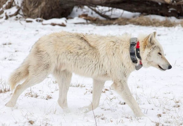 Beyond GPS: The Next High-Tech Frontier in Wild Animal Tracking
