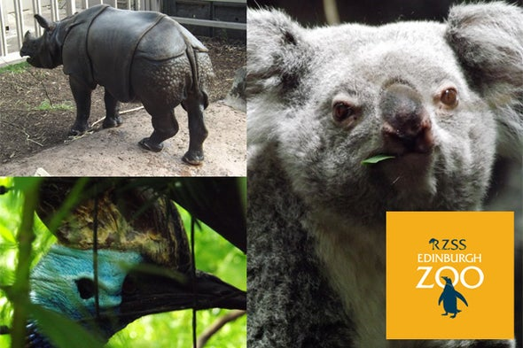 Tet Zoo Reviews Zoos: Edinburgh Zoo