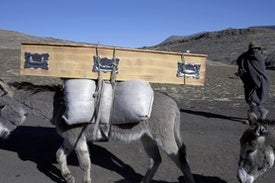 The Global Donkey Crisis--Yes, Really