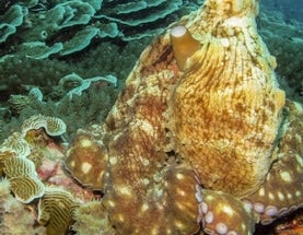 Happy 8/8! Can You Spot These 8 Hiding Octopuses?