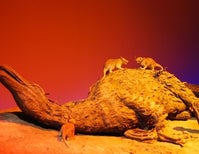 Fossil Jaws a Sign of When Mammals Bounced Back