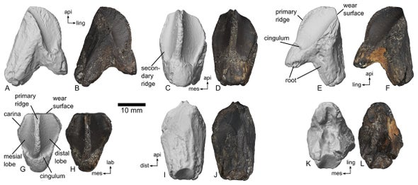 When Horned Dinosaurs Traveled East