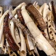 Why the U.S. Destroyed Its Ivory Stockpile