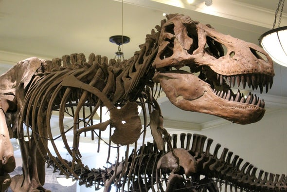 It's a Girl! Special <i>T. rex</i> Was an Expectant Mother