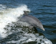 Hurricanes: Bad for People, Good for Dolphins
