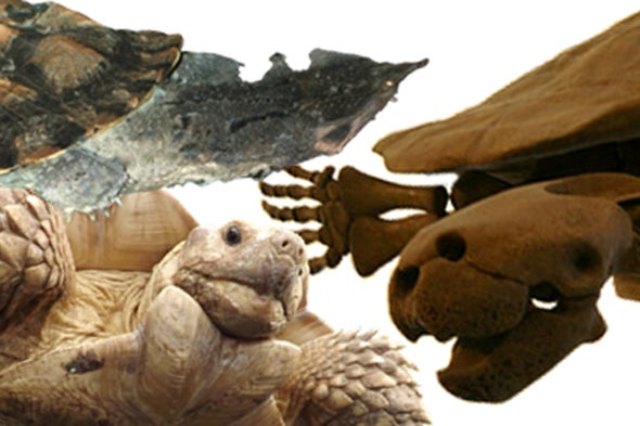 Letters from the World of Turtle Evolution