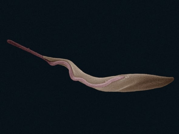 Sleeping Sickness Parasite Susceptible to Extinction Because It Hasn't Had Sex in 10,000 Years