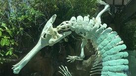 "The Secret of the Crocodile ""Death Roll"""