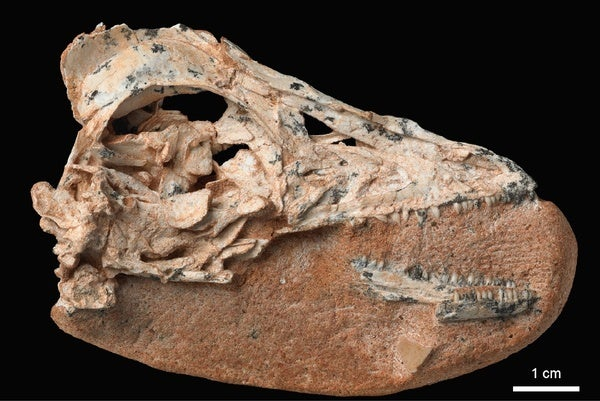 Paleo Profile: The Snowman Dinosaur