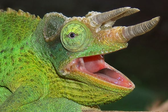 What's With All These New Chameleon Names?, Part 1
