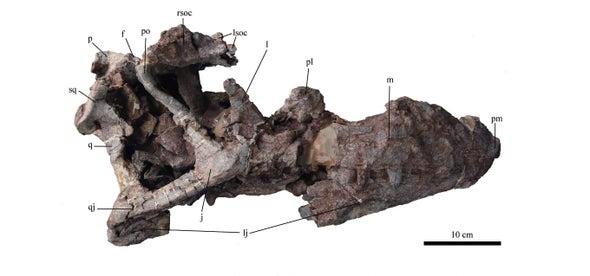 Paleo Profile: The Shuangbai Lizard