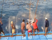 Catching Big Mama Fish Curbs Ocean Fertility
