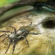 Paleo Profile: The Chimera Spider
