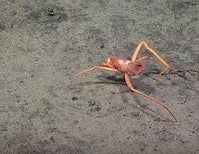 Halloween in the Deep: The Creepy Hermit Crab [Video]