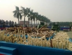 China Crushes Ivory, But Must Do More to Fight Wildlife Crime
