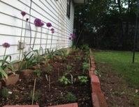 Green Thumbery: Flower Power