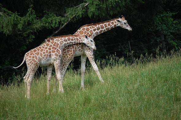 "Giraffe's ""Silent Extinction"" Finally Earns Some Noise"